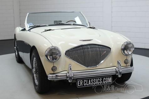 Austin Healey 100-4 BN2 1956  a vendre