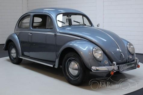 Volkswagen Beetle Oval 1955 a vendre